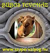 http://bubosokohaz.szupervalyog.com/bubos-teve-korut